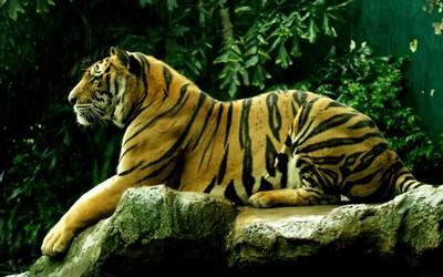 Экскурсия в Зоопарк Дусит в Бангкоке