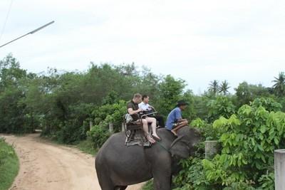 Слоновья ферма Parata Elephant Farm