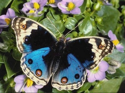 nezabyivaemyij sad tropicheskih babochek Незабываемый сад тропических бабочек