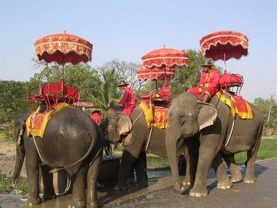 slonyi v tailande Слоны в Таиланде