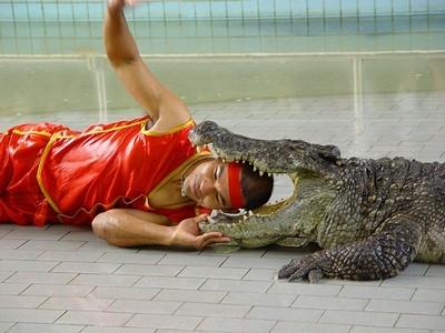 uvlekatelnaya ekskursiya na krokodilovuyu fermu v tailande Увлекательная экскурсия на крокодиловую ферму в Таиланде